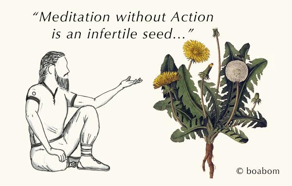 Meditation & the Seed
