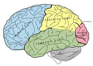 boabom-brain-3